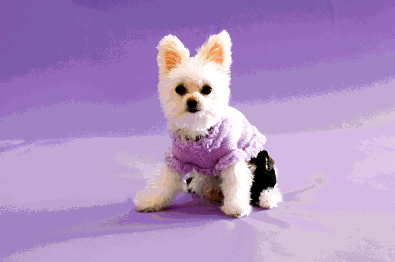 DOGGIE FASHION TRENDS