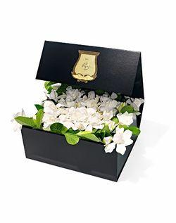 2014_VINE & BLOOM DELUXE BOX SET (473x600)